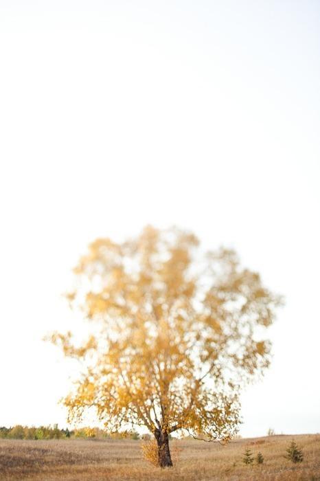 lens-selection-5.jpg