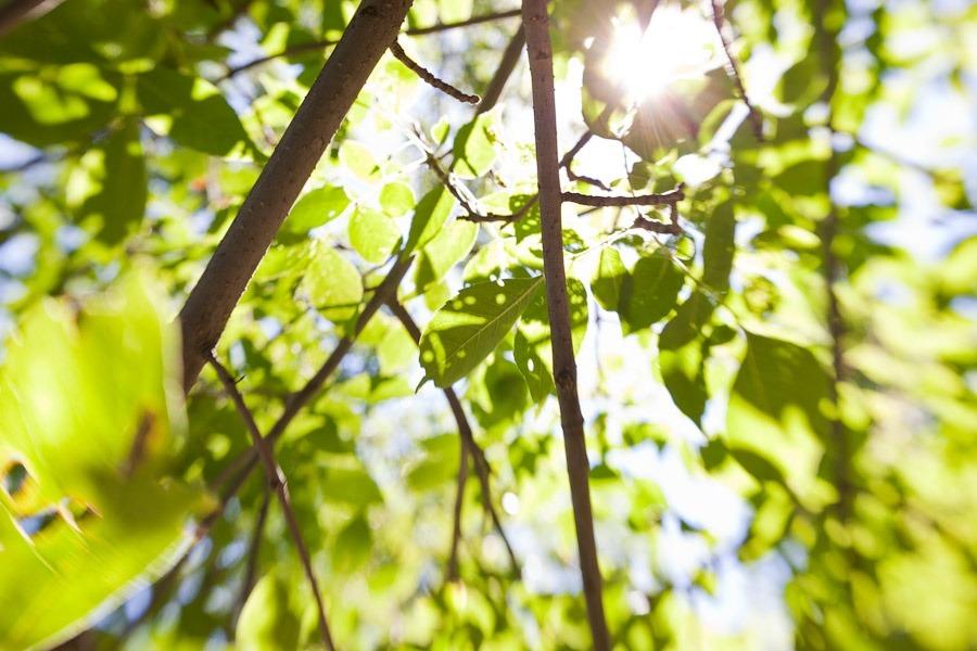 lensbaby-garden-0001.jpg