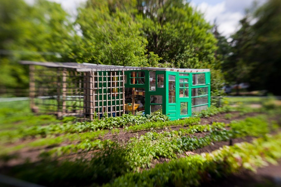lensbaby-garden-0005.jpg