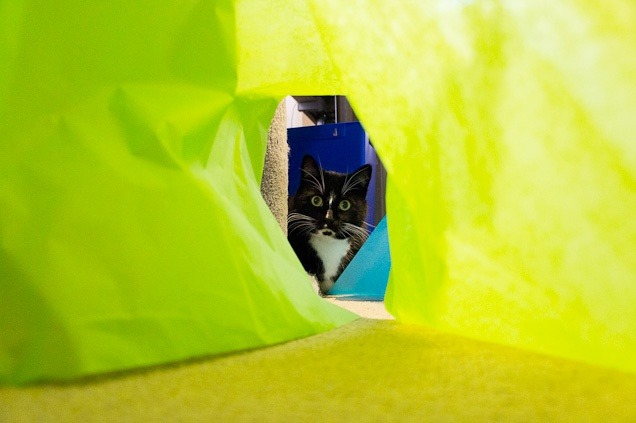 Surprised cat peeks through paper castle
