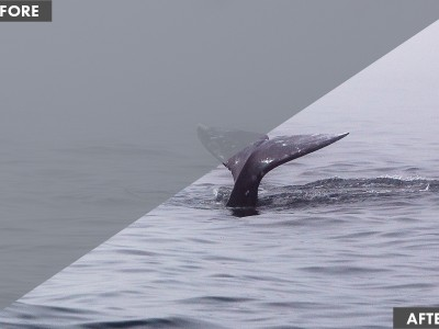 Whales in the Mist: How to Get Great Photos in Foggy Scenes
